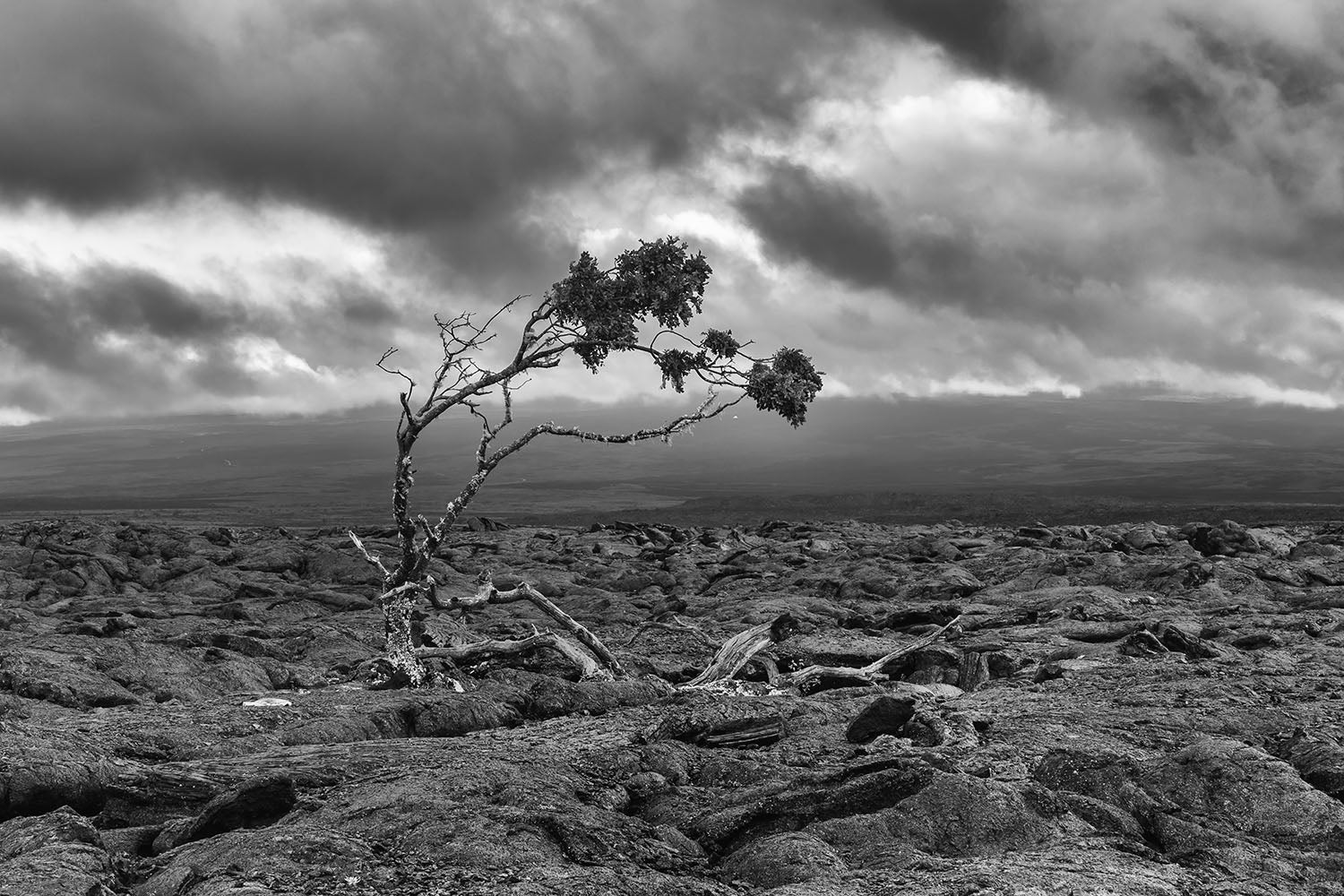 Landscape photograph of a tree in lava rock on the Big Island, Hawaii - by Jonathan Elcock