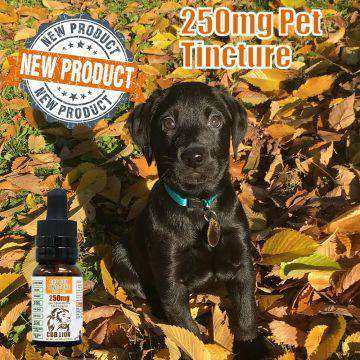 CBD Lion 250mg CBD Pet Tincture 15ML - icbdoil.com