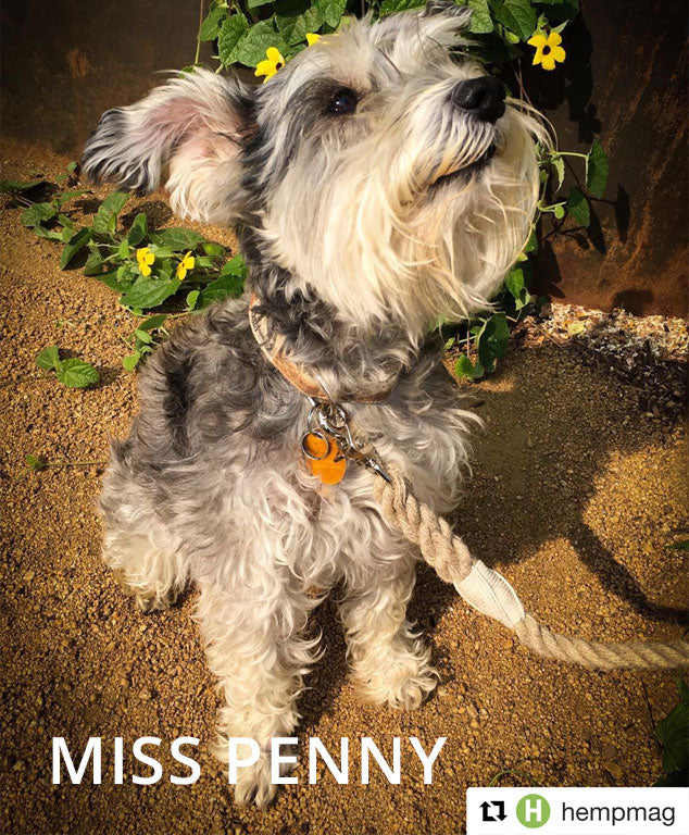 Miss Penny - Lil' Adventurer Collar & Hemp Rope Leash