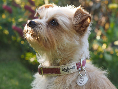 Lil' Adventurer Cork Leather Hemp Dog Collar in Pink