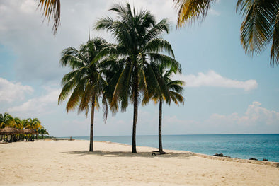 Three palm trees on a beach