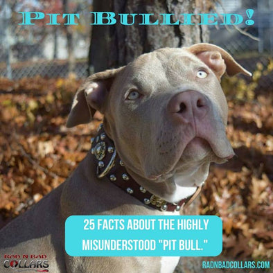 "Pit Bullied! 25 Facts About the Highly Misunderstood ""Pit Bull"""
