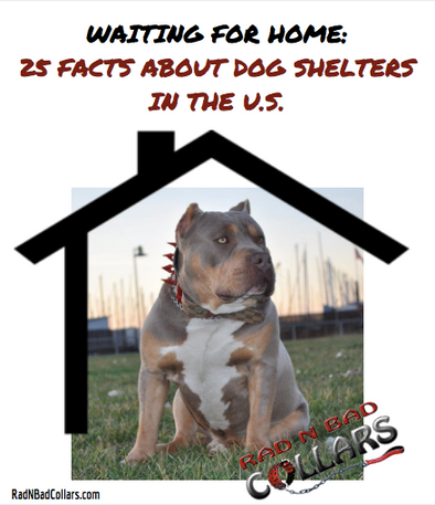 25 Facts About Dog Shelters in the U.S.