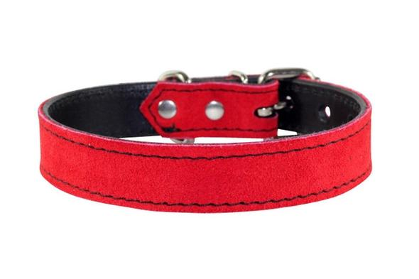 Puppy & Small Dog collars