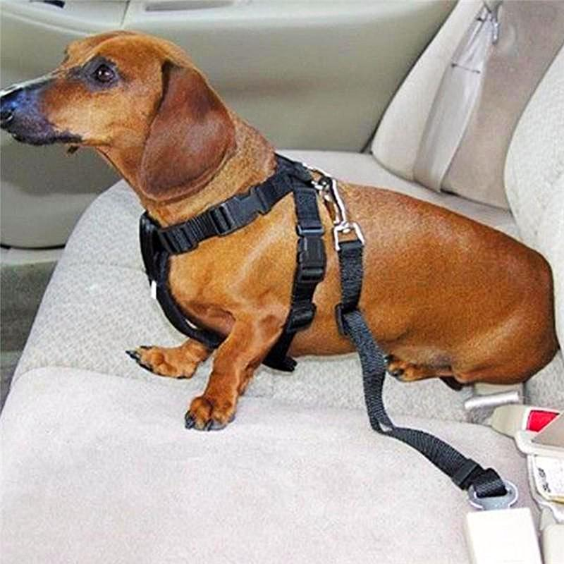 FREE Dog Seat Belt 🔥[LIMITED - ENDS TODAY!] ⌛😀