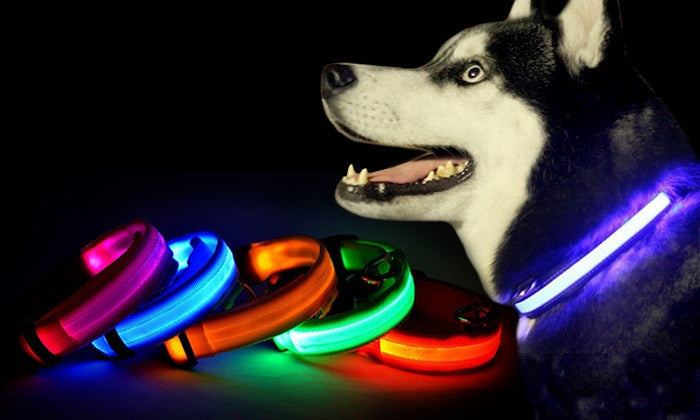Special 👍 LED Pet Safety Collar [saves 6M dogs & cats on US roads]💓🐶😺