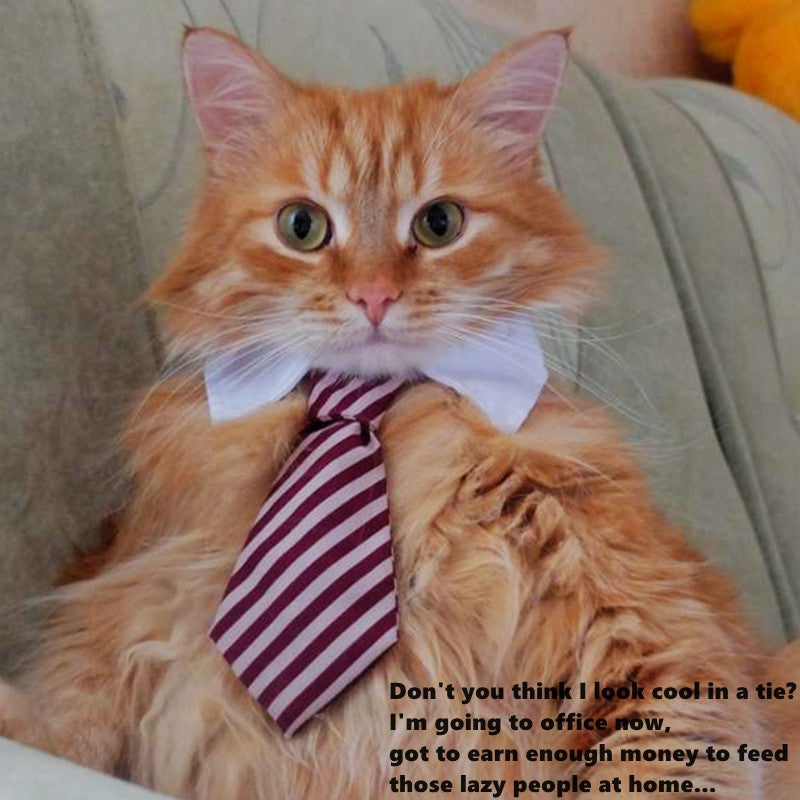My Cat is CEO Boss Cute Tie Collection Offer