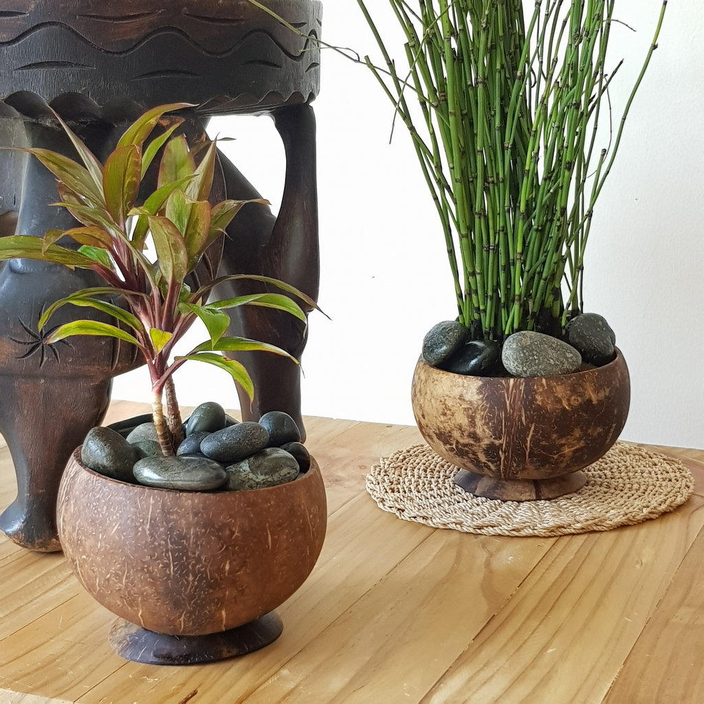 Coconut Planter