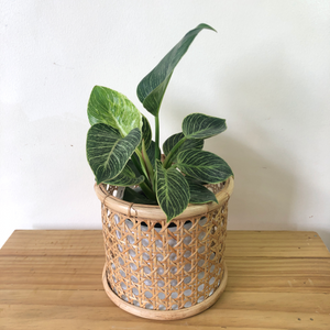 Solihiya Planter Sleeve in Small