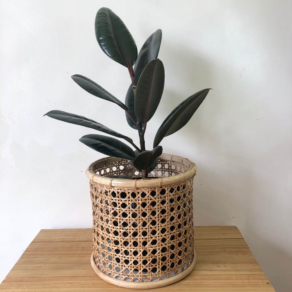 Solihiya Planter Sleeves in Medium
