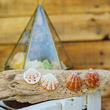 Load image into Gallery viewer, CORA Clam shell earrings - Island Girl