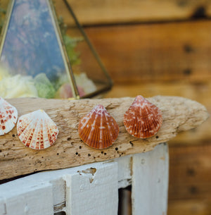 Cora Clam shell earrings - Island Girl