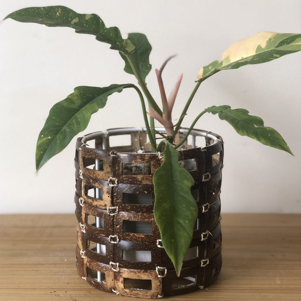Coconut Planter Sleeve in Small