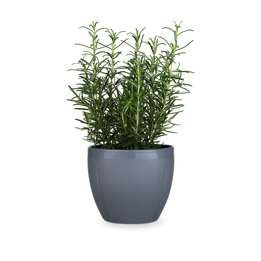Grand Cru Flower Pot, Grey, 6.3""