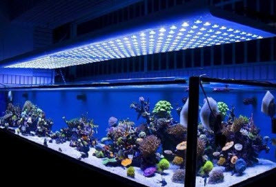 Aquarium Lighting & Hoods