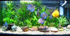 Aquarium Decor, Gravel & Sands