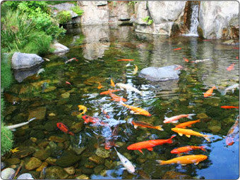 Fish Pond Supplies