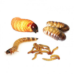 Edible Pupae Mix