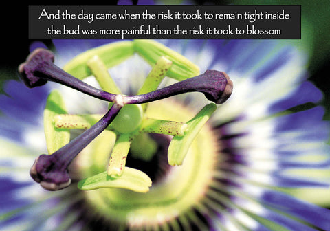 502 And the day came when the risk it took to remain tight inside the bud was more painful than the risk it took to blossom