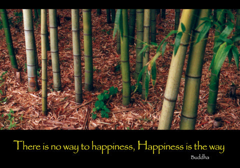 519  There is no way to happiness Happiness is the way