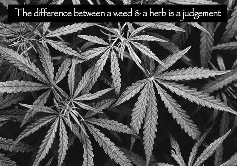25  The difference between a weed and a herb is a judgement