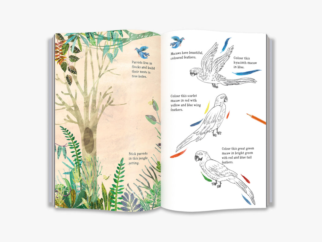 The Big Sticker Book Of Birds Activity Book