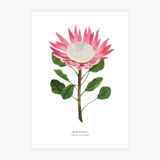 A4 King Protea Art Print