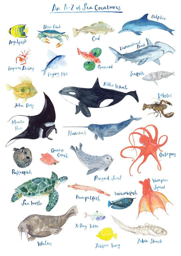 A-Z of Sea Creatures - A3