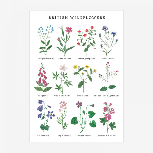 A3 British Wildflowers Art Print