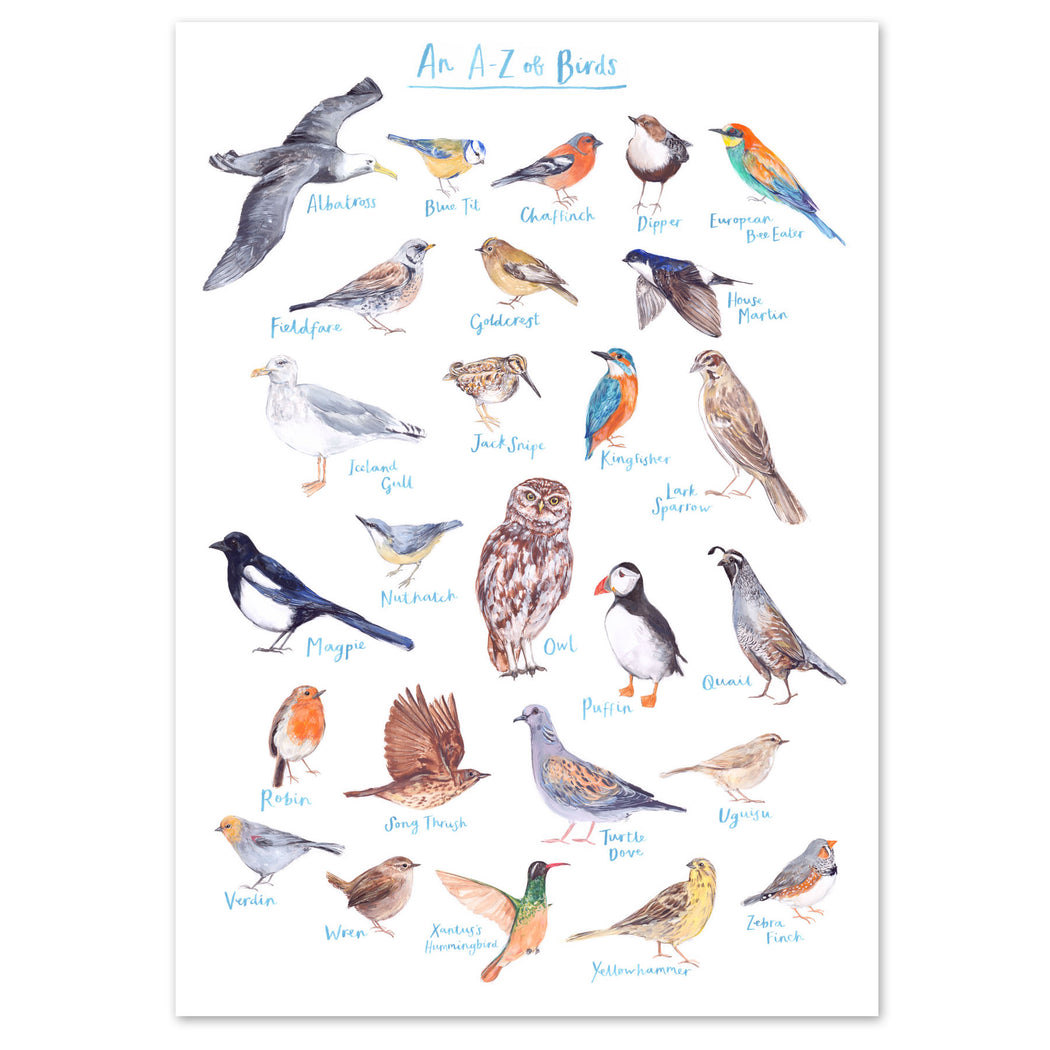A4 A to Z of Birds Art Print