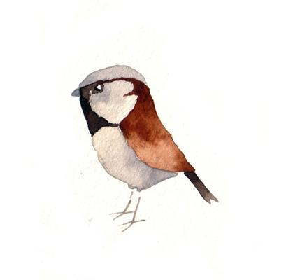 House Sparrow Bird Print