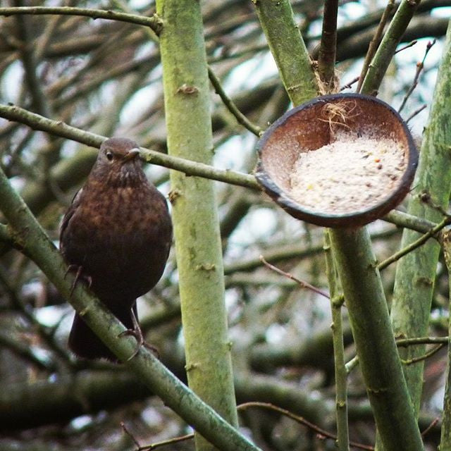 Common Garden Birds and What They Like to Eat