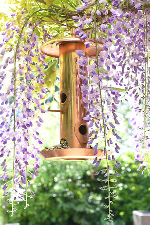 How to Choose a Bird Feeder