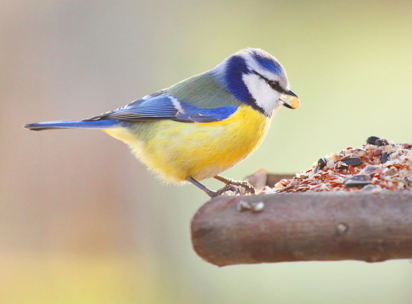 Dispelling the myth - why feeding the birds in Summer is important