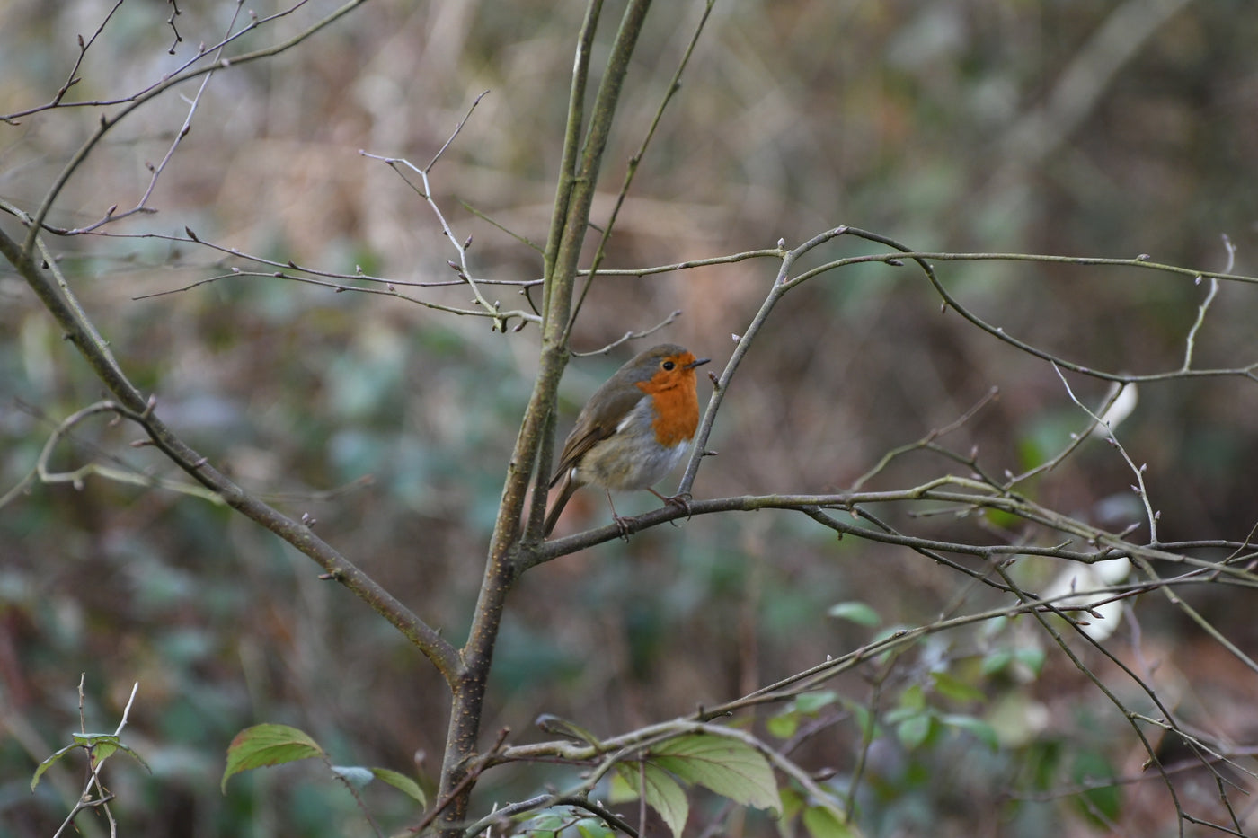 How to Protect Garden Wildlife in Winter
