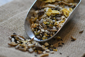 How to Choose Bird Seed