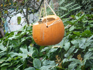 Video: Pumpkin Bird Feeder - watch Ben's video