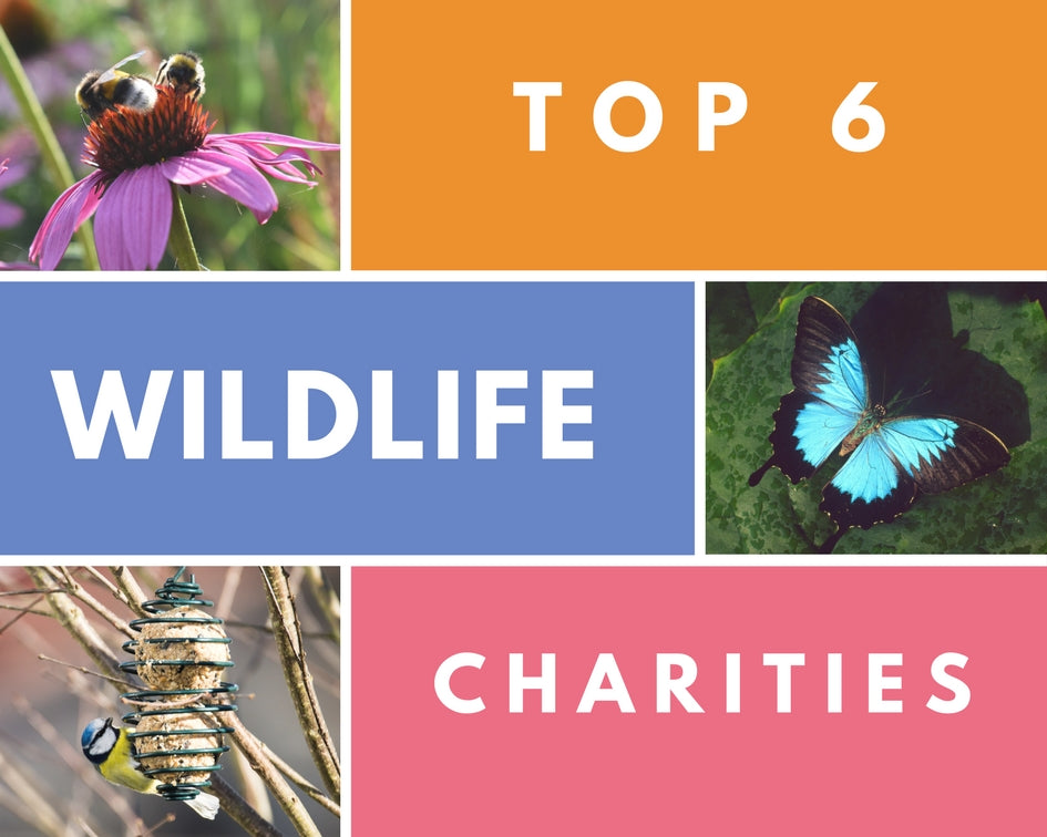 Top 6 Wildlife Charities in the UK