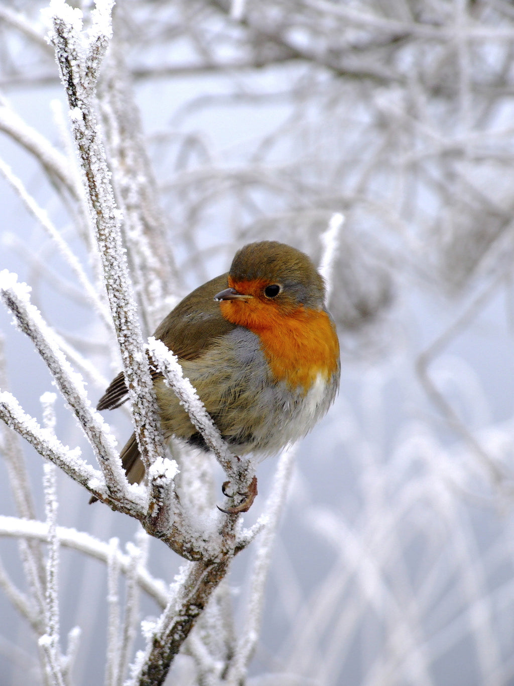 Christmas Gift Ideas for Bird Lovers