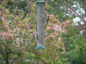 Tips for attracting more birds to your feeders