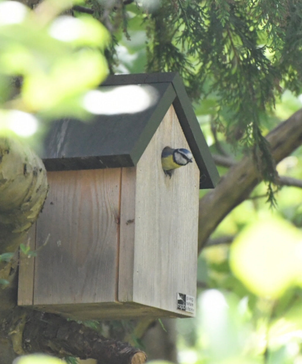 How to Choose a Bird Box
