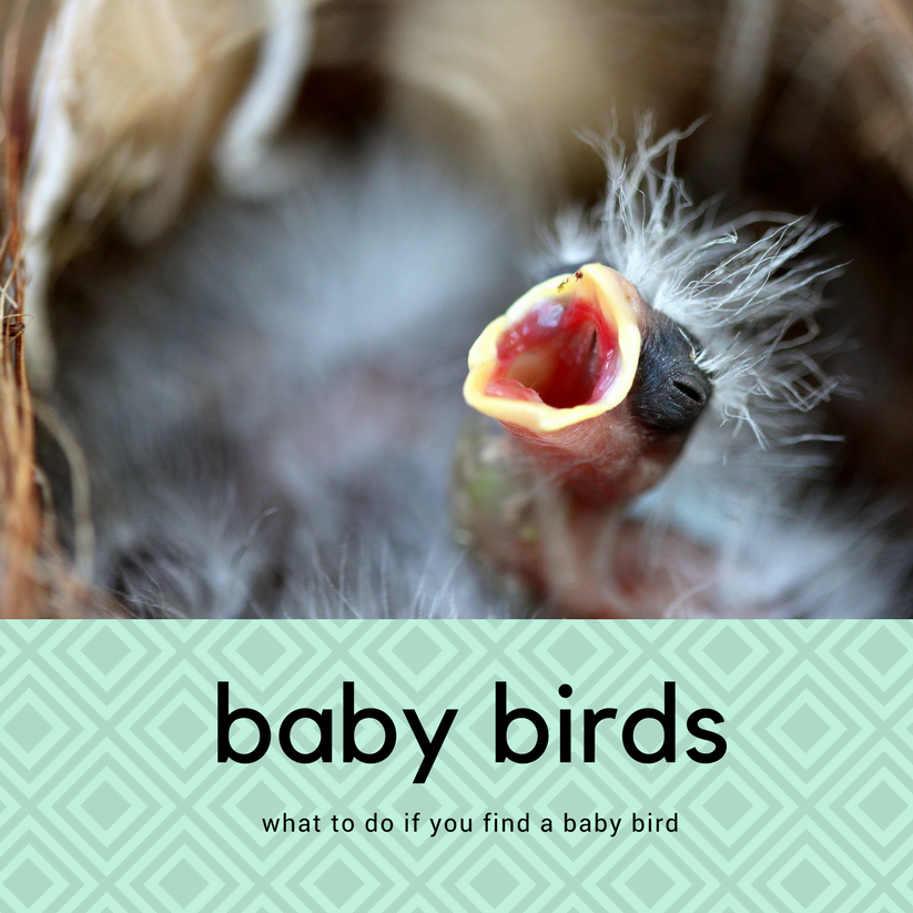 What to Do If You Find a Baby Bird
