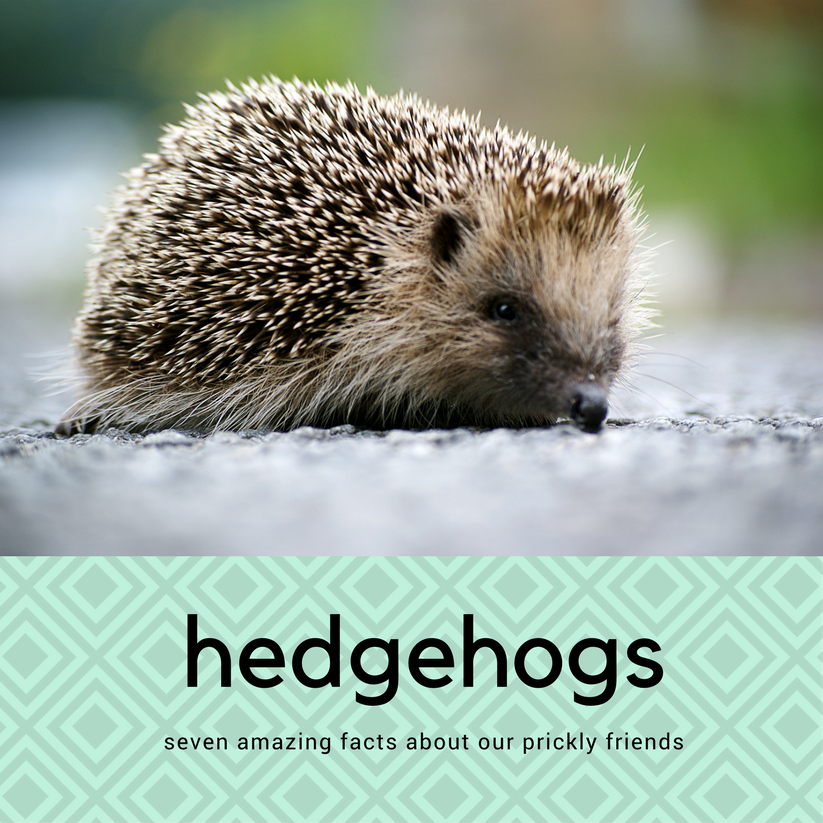 5 Garden Hazards that Spell Danger for Hedgehogs
