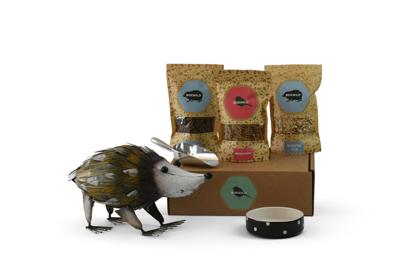 Hedgehog Gift Box and Hedgehog Ornament