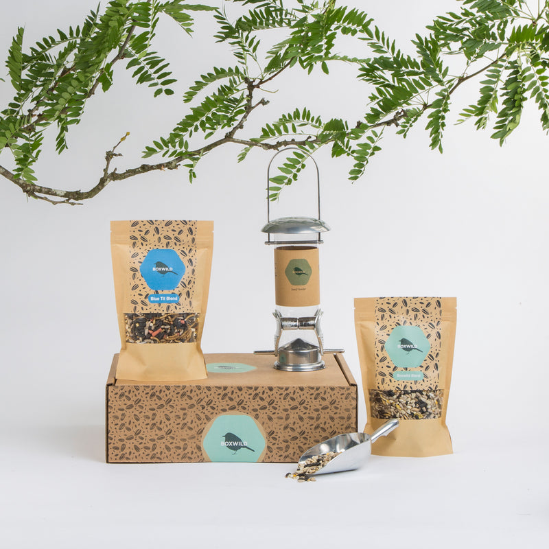 Bird Gift - Blue tit gift box