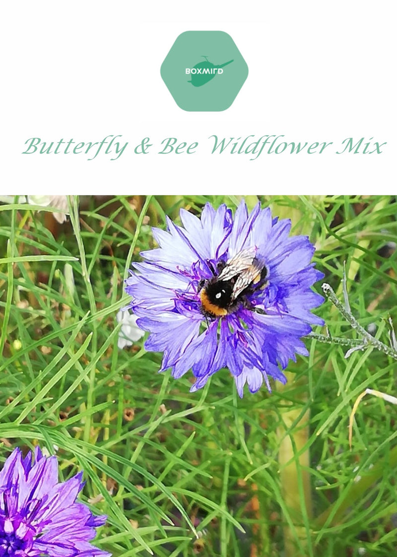 Butterfly & Bee Wildflower Mix