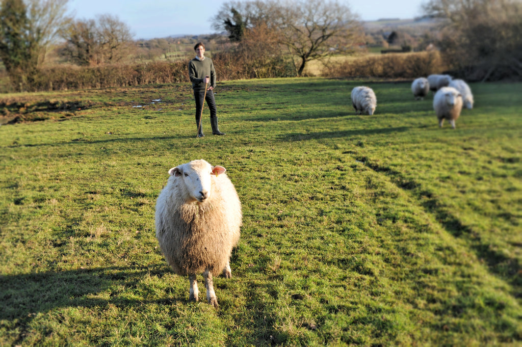 Upstaged by Sheep . . .