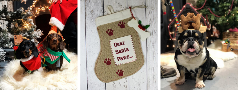 santa paws stocking for dogs
