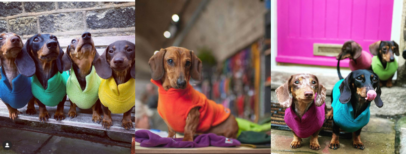 dachshund fleece jumpers in bright colours