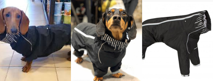 best waterproof coats for dachshunds - hurtta downpour suit
